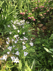 春の花壇.jpg