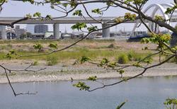 河原&さぎ.jpg